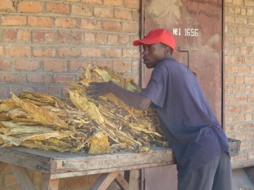farm worker Mvurwi