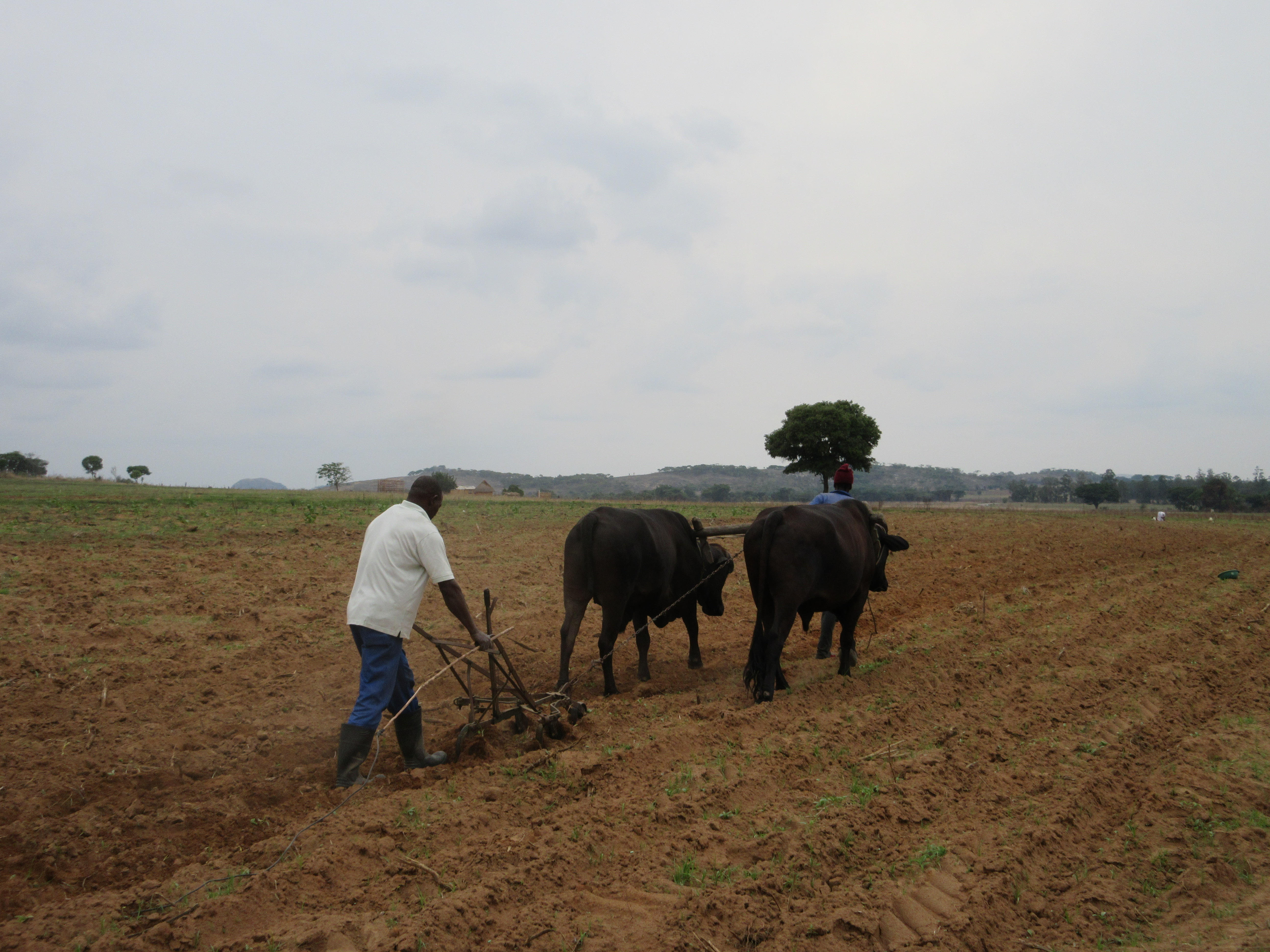 land tenure reform in zimbabwe essay Introduced in 1994, south africa's land reform programme is based on both   policy measures to reform land tenure in rural  framework (the communal land  tenure policy) is being  our future – make it work: ndp executive summary.